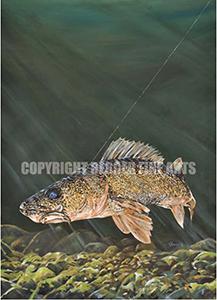 Walleye In Deep Water