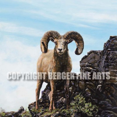 Bighorn Sheep Touching The Sky